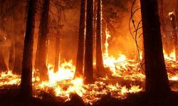 wildfire-1105209__340